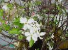 りんご花木水耕栽培