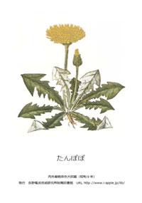 植物図鑑のタンポポへ